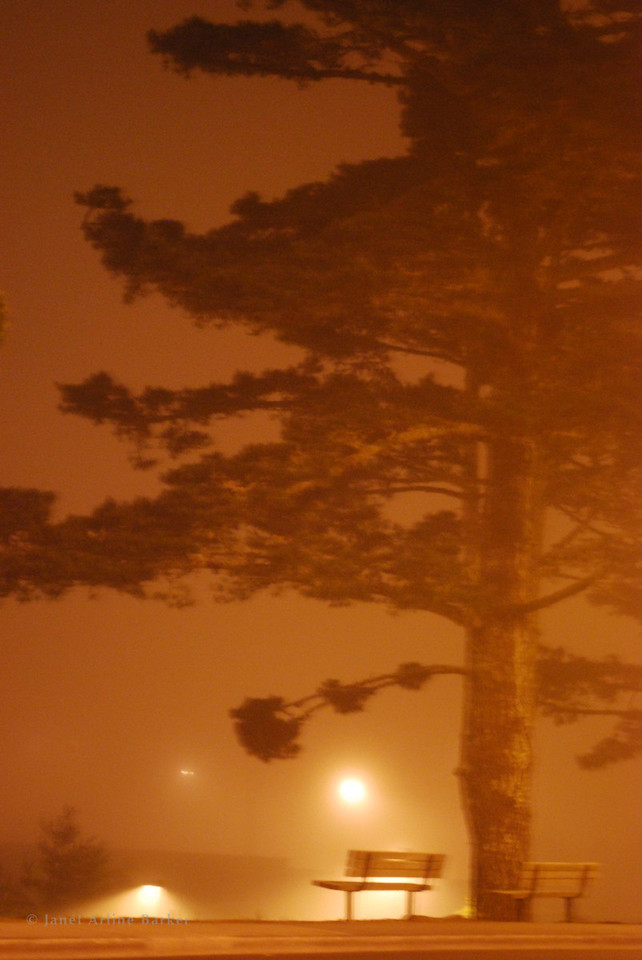 Pacifica-Night Fog